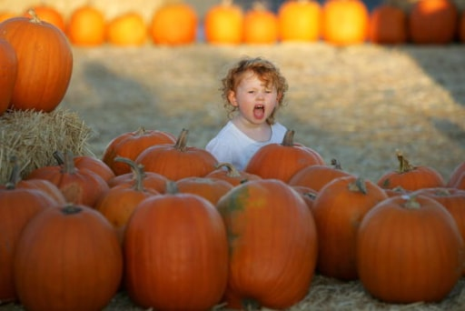 check out a list of fall festivals halloween events and more to do with your kids